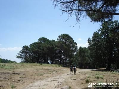 Pinares de Piedralaves; rutas a pie por madrid rutas senderismo cercedilla ruta sierra madrid